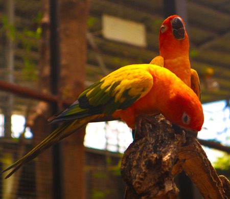 Beautiful colorful Parrot and Macaw bird  in the nature tropical  zoo 写真素材