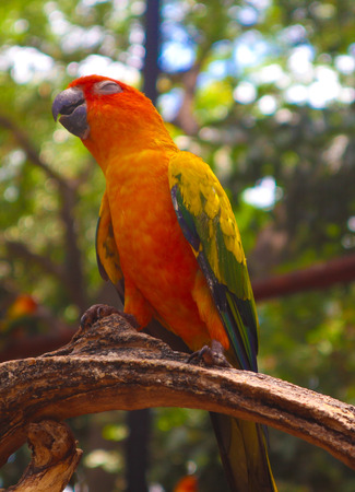 Beautiful colorful Parrot and Macaw bird  in the nature tropical  zoo Stock Photo