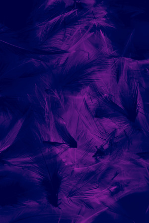 Beautiful abstract colorful blue purple and black feathers wall pattern textures background and wallpaper art 스톡 콘텐츠