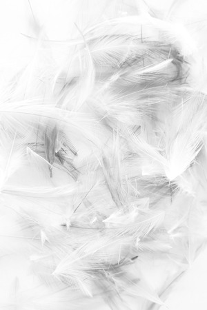 Beautiful abstract colorful white and black light feathers wall pattern textures background and wallpaper art 스톡 콘텐츠