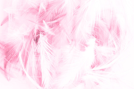 Beautiful abstract colorful white and pink light feathers wall pattern textures background and wallpaper art 스톡 콘텐츠