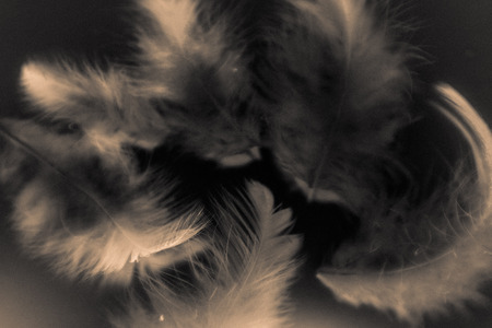 Beautiful abstract color white gray brown and gold feathers isolated on black background pattern and wallpaper