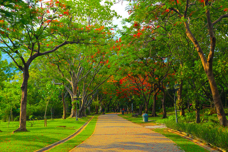 Beautiful flowers and tree forest landscaped in the public garden in the summer at Chatuchak Park Bangkok