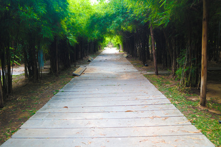 Beautiful tree and bamboo tunnel in the public parks background and wallpaper