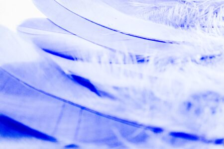 Beautiful abstract close up white light blue and purple feathers background and wallpaper