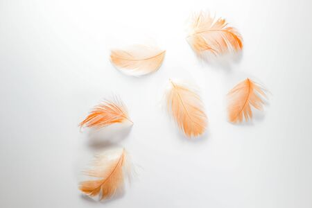 Beautiful abstract close up color white brown and orange  feathers on white isolated background and wallpaper 版權商用圖片