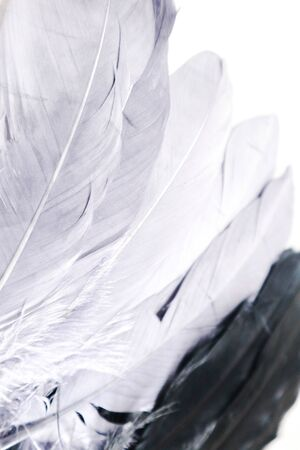 Beautiful abstract close up white light blue and purple feathers background and wallpaper Stock Photo