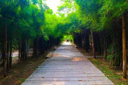 Beautiful nature and forest bamboo and tree tunnel road at public parks Stock fotó