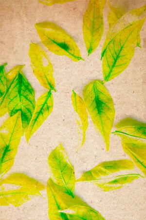 Beautiful abstract color yellow and green tree leaf on the white and brown isolated background and wallpaper Stock Photo
