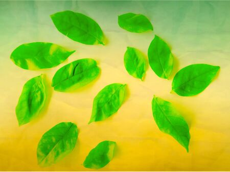Beautiful abstract color yellow and green tree leaves on the white and brown isolated background and wallpaper Stock Photo