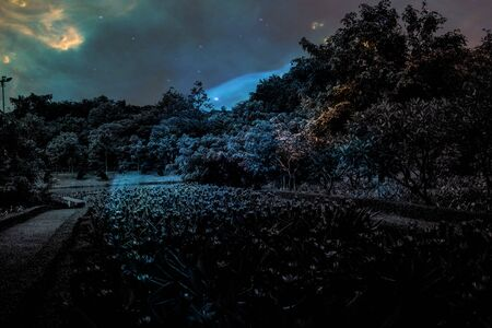 Beautiful abstract texture colorful black and white flowers and tree plant forest landscape  on the darkness and aurora Polaris and the stars on the sky milky way galaxy background and wallpaper 免版税图像