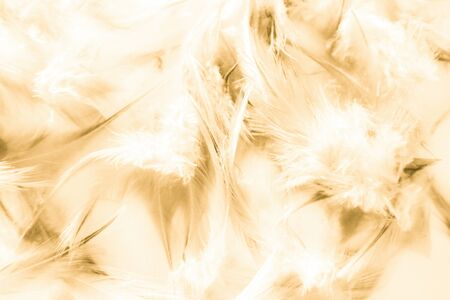 Beautiful abstract texture close up color white gold brown and yellow feathers background and wallpaper