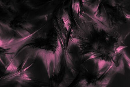 Beautiful abstract texture close up color black purple and pink feathers background and wallpaper