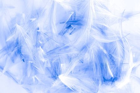 Beautiful abstract purple and blue feathers on white background and colorful soft white feather texture