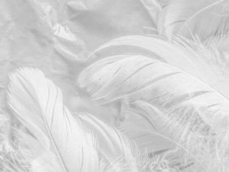 Beautiful abstract white feathers on white background and soft black feather texture on white pattern and light background, gray feather background, grey banners
