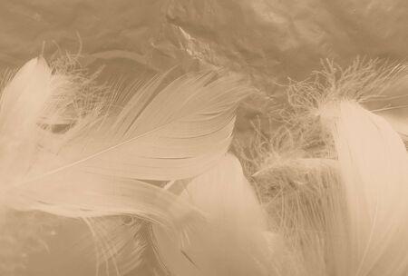 Belle piume astratte bianche e marroni su sfondo bianco e morbida trama di piume gialle su motivo bianco e sfondo giallo, sfondo di piume, striscioni di piume d'oro