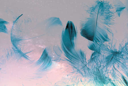 Beautiful abstract colorful blue feathers on white background and soft white feather texture on blue pattern and blue background, feather background, blue banners Banque d'images
