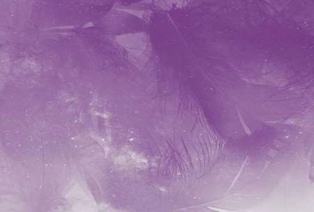 Beautiful abstract purple feathers on white background and soft white feather texture on white pattern and purple background, feather pink background, purple banners
