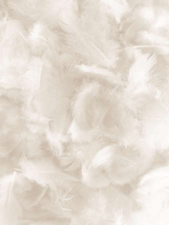 Beautiful abstract gray and white feathers on white background, soft brown feather texture on white pattern background, gray feather background