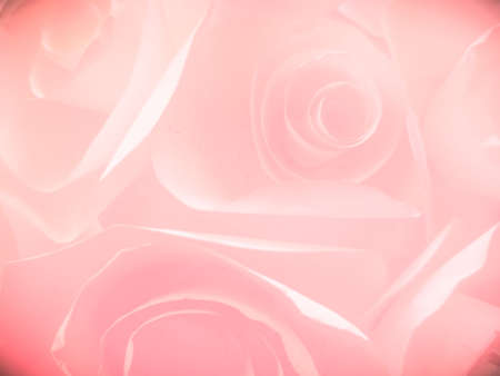 Beautiful abstract color pink flowers on white background and whit flower frame and pink leaves texture, pink background, colorful graphics banner happy valentine day
