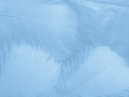 Beautiful abstract colorful white and blue feathers on white background and soft white feather texture on blue pattern and blue background, feather background, blue banners Imagens