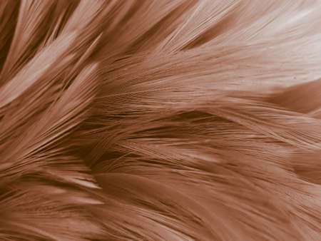 Beautiful abstract orange and white feathers on white background, soft brown feather texture on white pattern background, yellow feather background 스톡 콘텐츠 - 154338607