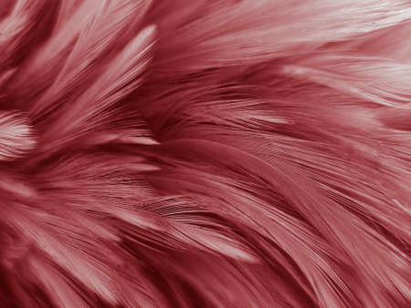 Beautiful abstract white and red feathers on black background and soft white feather texture on red pattern and red background, pink feather background, white banners Stock fotó
