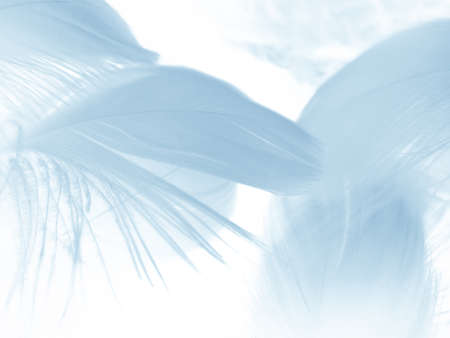 Beautiful abstract colorful white and blue feathers on white background and soft white feather texture on blue pattern and blue background, feather background, blue banners Stock fotó