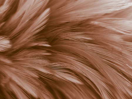 Beautiful abstract orange and white feathers on white background, soft brown feather texture on white pattern background, yellow feather background 스톡 콘텐츠 - 154338630