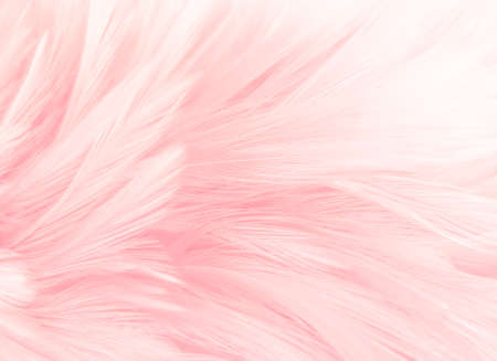 Beautiful abstract white and pink feathers on white background and soft white feather texture on pink pattern and pink background, feather background, pink banners 免版税图像