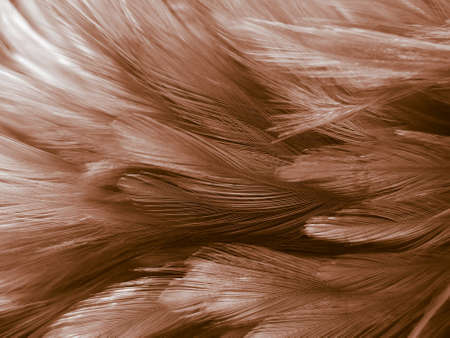Beautiful abstract orange and white feathers on white background, soft brown feather texture on white pattern background, yellow feather background