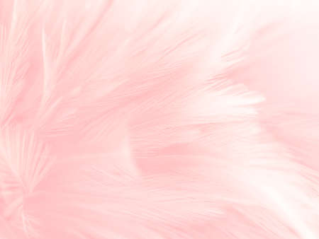 Beautiful abstract white and pink feathers on white background and soft white feather texture on pink pattern and pink background, feather background, pink banners 版權商用圖片