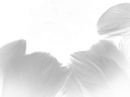 Beautiful abstract gray and white feathers on white background, soft brown feather texture on white pattern background, yellow feather background 스톡 콘텐츠