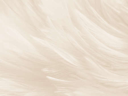 Beautiful abstract gray and white feathers on white background, soft brown feather texture on white pattern background, yellow feather background 免版税图像