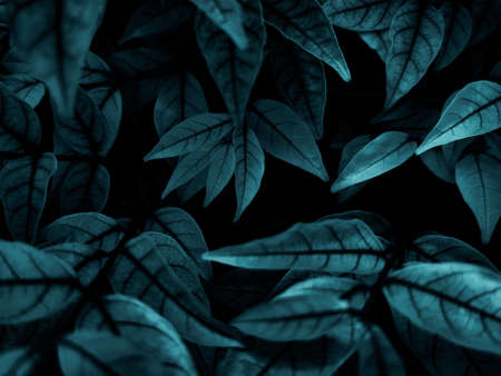 Beautiful abstract green flowers on dark background and blue flower frame and green leaves texture, green background, colorful graphics banner