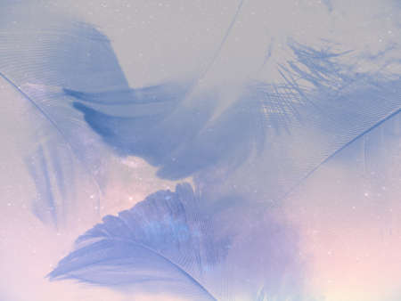 Beautiful abstract colorful white and blue feathers on white background and soft purple feather texture on blue pattern and blue background, feather background, blue banners 스톡 콘텐츠 - 154249723