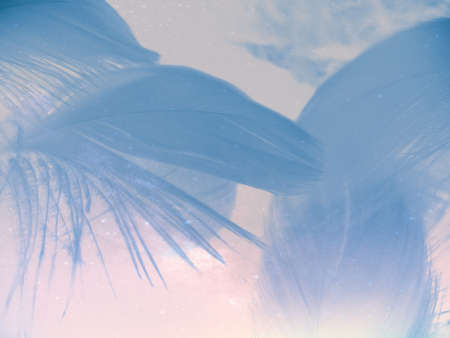 Beautiful abstract colorful white and blue feathers on white background and soft white feather texture on blue pattern and blue background, feather background, blue banners 스톡 콘텐츠 - 154249727