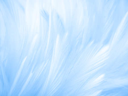 Beautiful abstract colorful white and blue feathers on white background and soft white feather texture on blue pattern and blue background, feather background, blue banners 스톡 콘텐츠 - 154249771