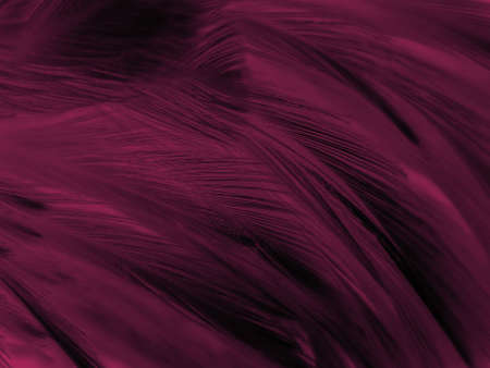 Beautiful abstract pastel pink feathers on dark background, red feather frame texture on red background, dark feather, black banners 스톡 콘텐츠 - 154249773