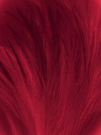 Beautiful abstract pastel pink feathers on dark background, red feather frame texture on red background, dark feather, black banners