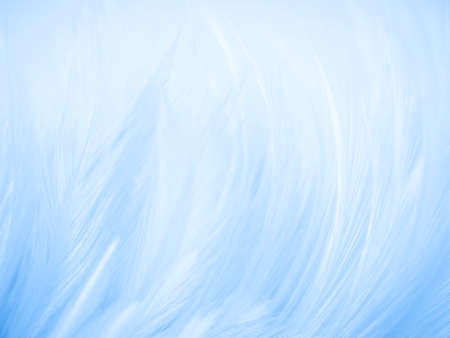 Beautiful abstract colorful white and blue feathers on white background and soft white feather texture on blue pattern and blue background, feather background, blue banners 스톡 콘텐츠 - 154249790