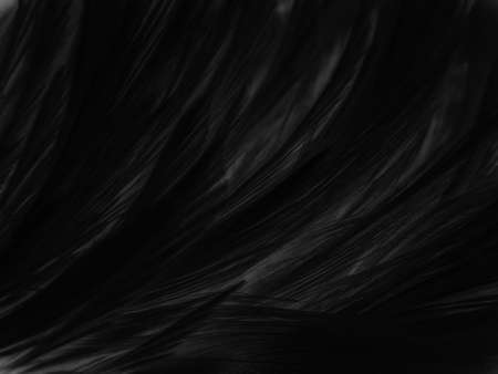 Beautiful abstract black feathers on dark background, gray feather texture on black background, white feather background