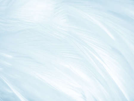 Beautiful abstract colorful white and blue feathers on white background and soft white feather texture on blue pattern and blue background, feather background, blue banners 스톡 콘텐츠 - 154249815