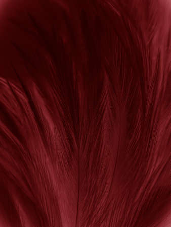 Beautiful abstract pastel pink feathers on dark background, red feather frame texture on pink background, dark feather, black banners 스톡 콘텐츠 - 154249817