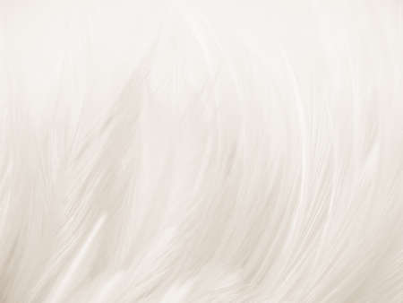 Beautiful abstract gray and white feathers on white background, soft brown feather texture on white pattern background, yellow feather background 스톡 콘텐츠 - 154339674