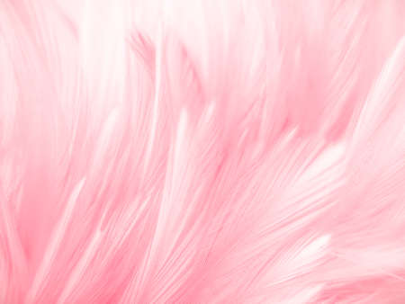 Beautiful abstract gray and pink feathers on white background,  white feather frame texture on pink pattern and pink background, feather, pink banners 스톡 콘텐츠 - 154838906