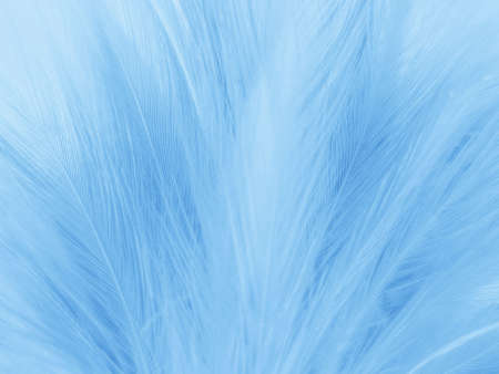 Beautiful abstract colorful white and blue feathers on white background and soft white feather texture on blue pattern and blue background, feather background, blue banners 스톡 콘텐츠 - 155268935