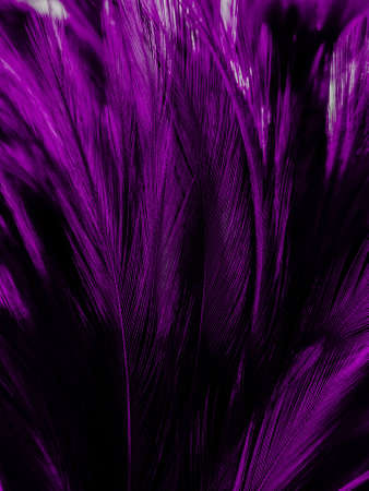 Beautiful abstract pastel purple feathers on dark background, black feather frame texture on purple background, dark feather, black banners