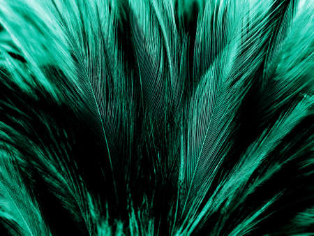 Beautiful abstract pastel green feathers on dark background, black feather frame texture on green background, dark feather, black banners