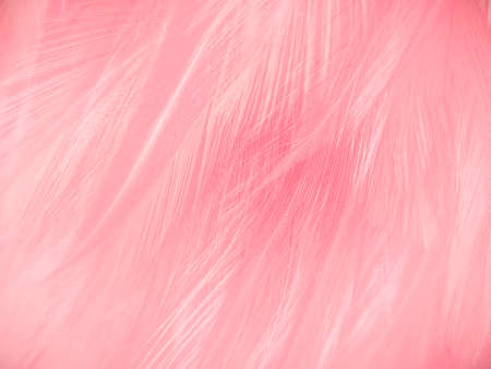 Beautiful abstract gray and pink feathers on white background,  white feather frame texture on pink pattern and pink background